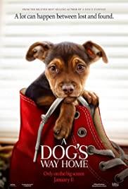 Subtitles A Dog's Way Home - subtitles english 1CD srt (eng)